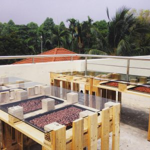 Beans sun drying in racks (Photo credit: Chocolate Concierge)